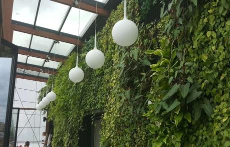 Ściana zielona wall green solution