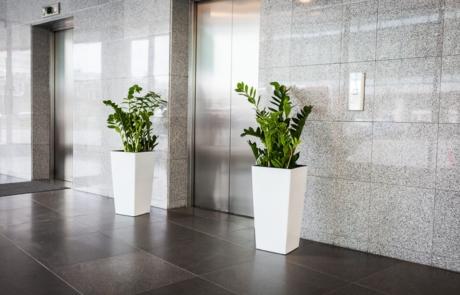 Rośliny, kwiaty do biura