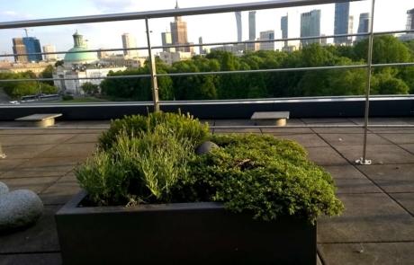 Rośliny doniczkowe biuro
