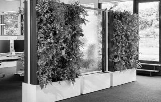 Ścianki zielone zdrowy klimat